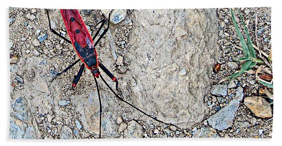 Common Red Bug Along The Seti River Road In Nepal Bath Sheet featuring the photograph Common Red Bug Along The Seti River Road-nepal by Ruth Hager