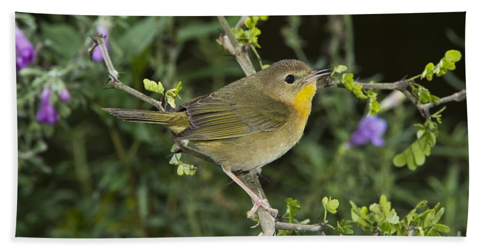 Common Yellowthroat Hand Towel featuring the photograph Common Yellowthroat Hen by Anthony Mercieca