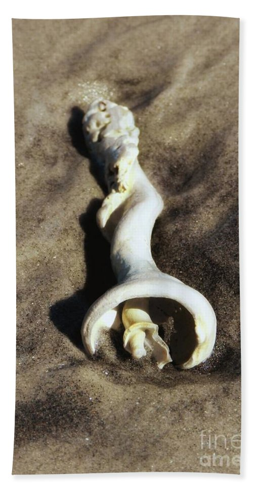 The Inner Spiral Of A Conch Shell Lying On The Beach Bath Sheet featuring the photograph Conch Shell Spiral by Sharon Woerner