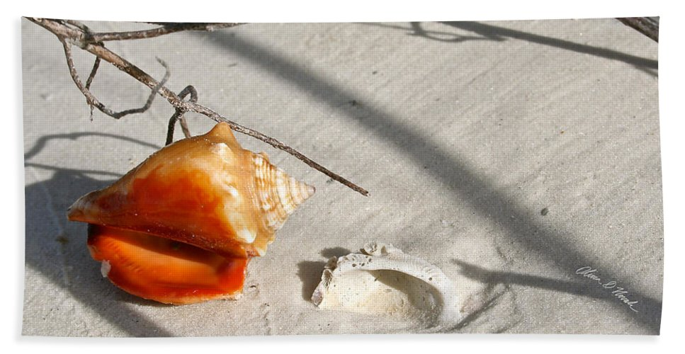 Conch Bath Sheet featuring the photograph Conch With Shell In Sand I by Olivia Novak