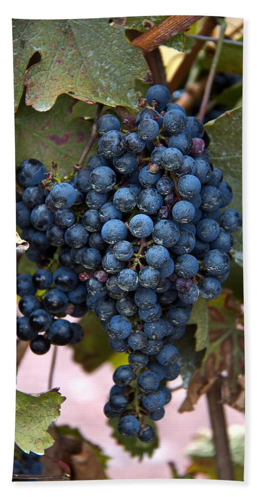 Grapes Hand Towel featuring the digital art Concord Grapes by Leeon Photo