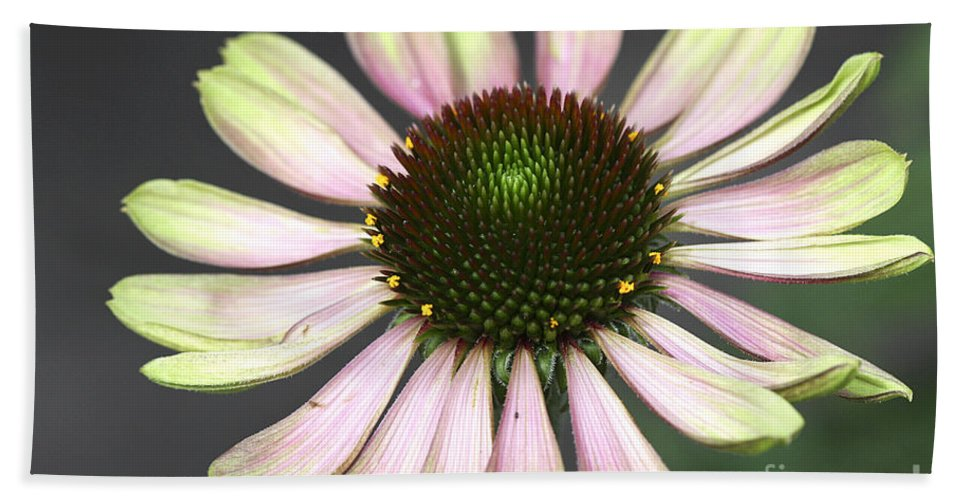 Flower Hand Towel featuring the photograph Cone Display by Deborah Benoit