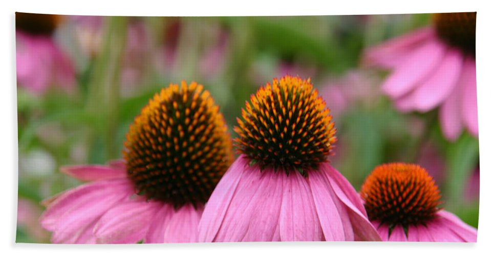 Cone Flower Trio Hand Towel featuring the photograph Cone Flower Trio by Denyse Duhaime