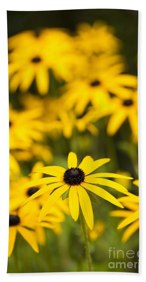 Coneflower Hand Towel featuring the photograph Coneflowers by Anne Gilbert