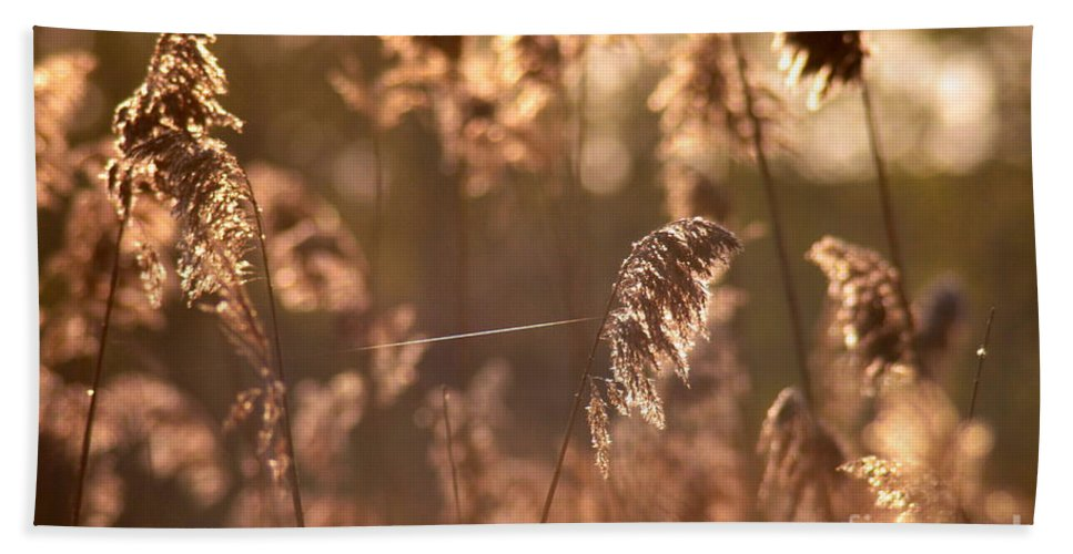 Sun Bath Sheet featuring the photograph Connected by Kenny Glotfelty