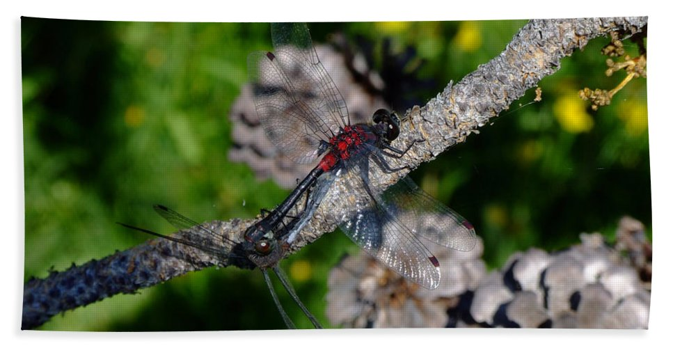 Dragonfly Bath Sheet featuring the photograph Consumate Romantic by Donna Blackhall