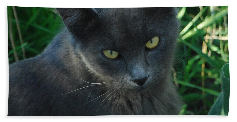 Cat Hand Towel featuring the photograph Contemplation by Donna Blackhall
