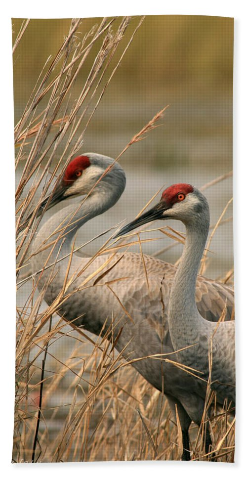 Sandhill Cranes Bath Sheet featuring the photograph Content Pair by Crystal Heitzman Renskers