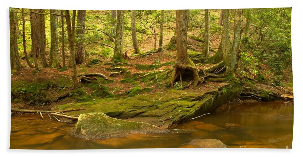 Toms Run Hand Towel featuring the photograph Cook Forest Rocks And Roots by Adam Jewell
