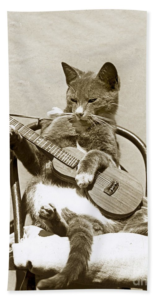 Fun Hand Towel featuring the photograph Cool Cat Playing A Guitar Circa 1900 Historical Photo By Photo Henry King Nourse by California Views Mr Pat Hathaway Archives