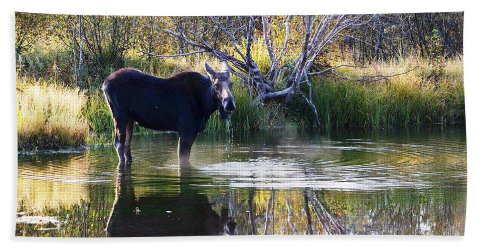 Moose Bath Sheet featuring the photograph Cool Fall Air by Deanna Cagle