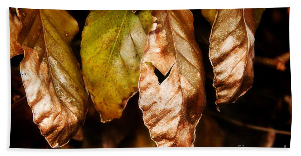 Beech Hand Towel featuring the photograph Copper Beech Leaves by Susie Peek