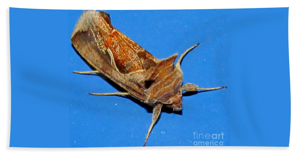 Copper Crested Shield Moth Bath Sheet featuring the photograph Copper Crest Shield Moth by Joshua Bales