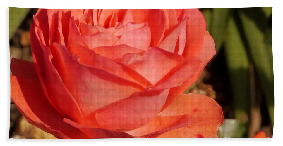 Coral Rose Hand Towel featuring the photograph Coral Surprise by Christiane Schulze Art And Photography