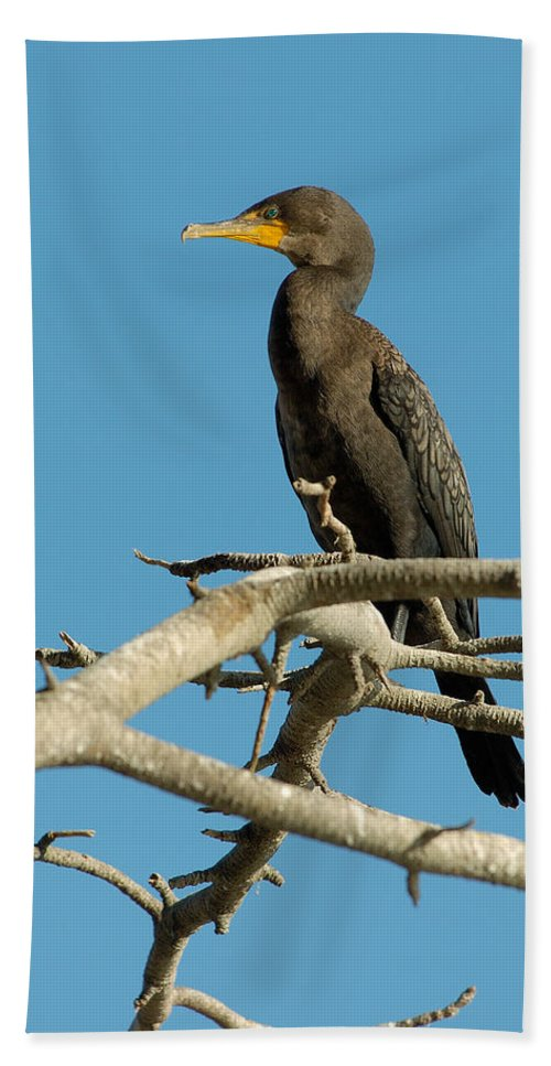 Cormorants Bath Towel featuring the photograph Cormorant by Sebastian Musial