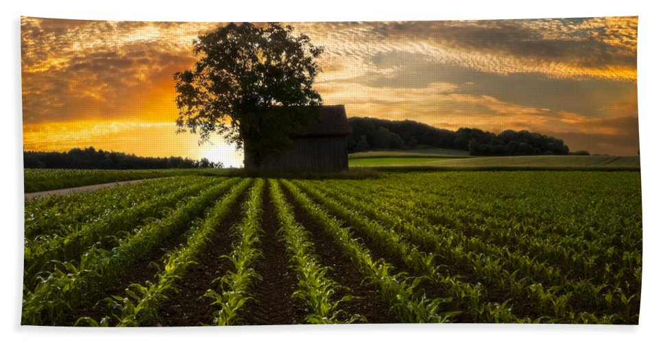 Appalachia Hand Towel featuring the photograph Corn Rows by Debra and Dave Vanderlaan