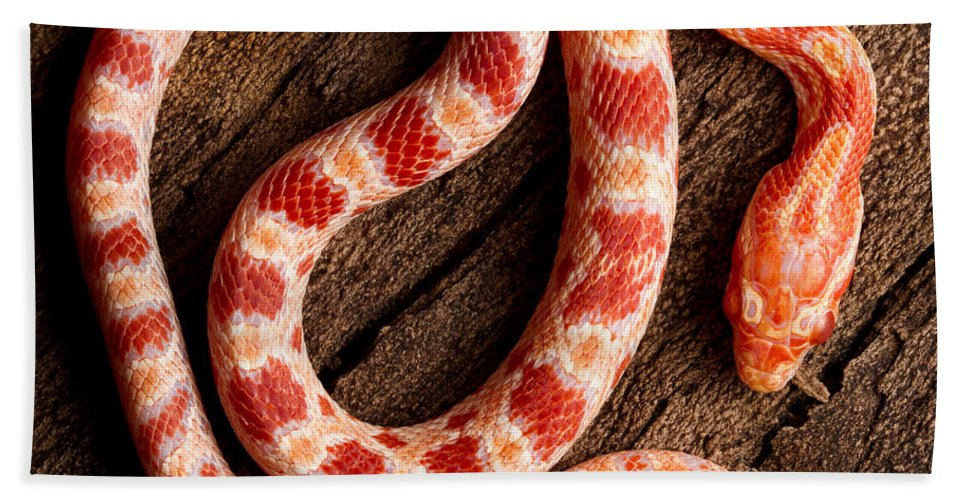 Nature Hand Towel featuring the photograph Corn Snake P. Guttatus On Tree Bark by David Kenny