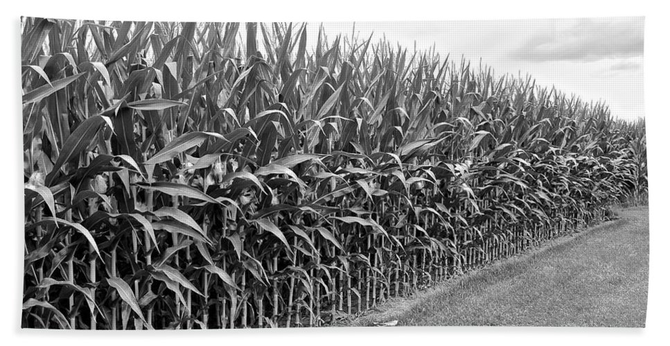 Cornfield Hand Towel featuring the photograph Cornfield Black And White by Frozen in Time Fine Art Photography