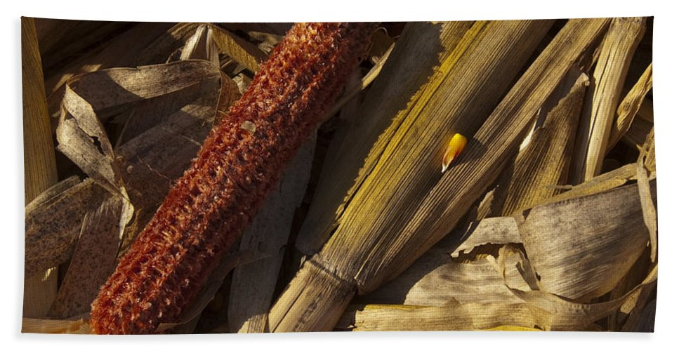Farm Hand Towel featuring the photograph Cornhusk by Paul Cannon