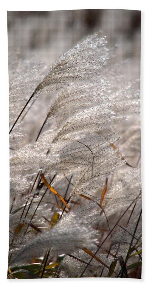 Beige Hand Towel featuring the photograph Cortaderia Selloana by Bonfire Photography