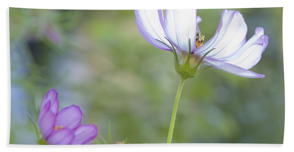 Floral Bath Sheet featuring the photograph Cosmo Lite by Theresa Tahara