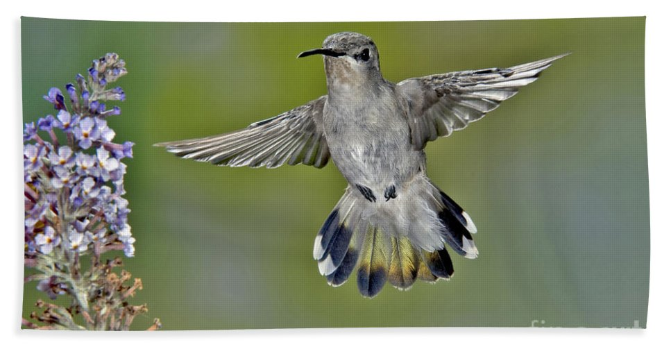 Costa's Hummingbird Hand Towel featuring the photograph Costas Hummingbird by Anthony Mercieca