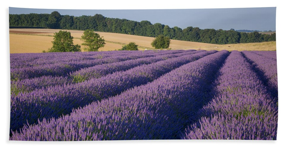 Cotswolds Hand Towel featuring the photograph Cotswolds Lavender by Brian Jannsen