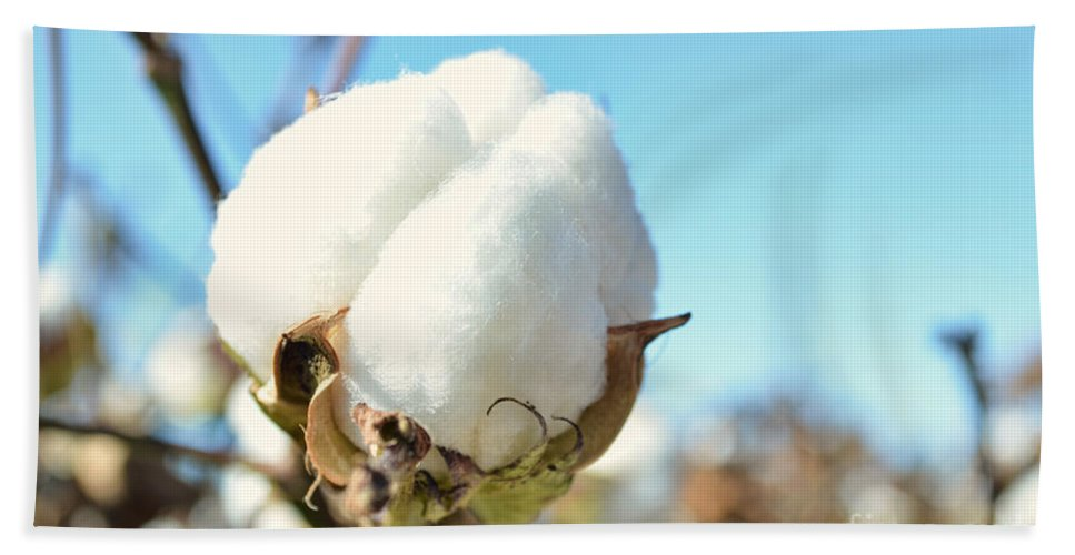 Nature Bath Sheet featuring the photograph Cotton Boll I by Debbie Portwood