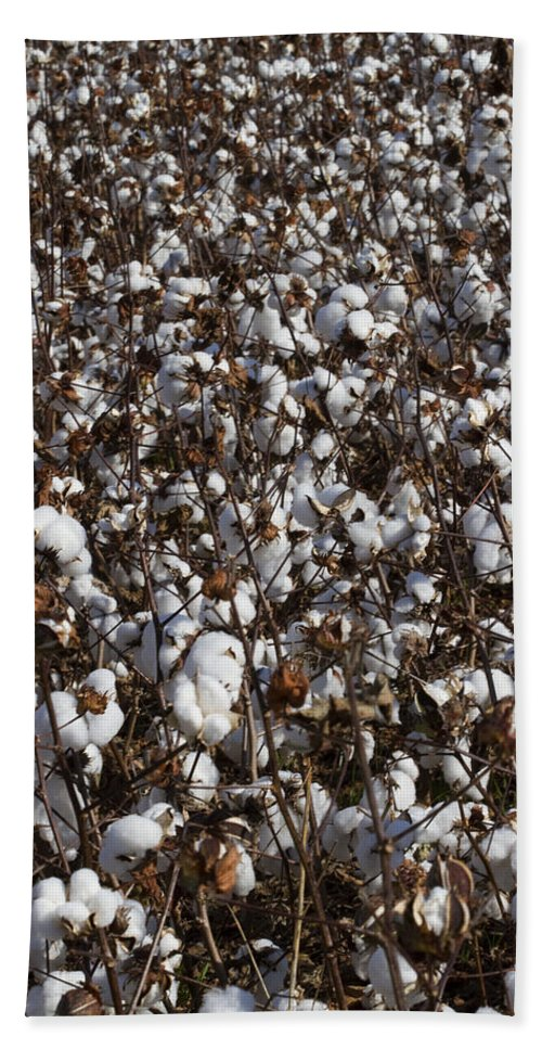 Cotton Hand Towel featuring the photograph Cotton By The Acre In Limestone County by Kathy Clark