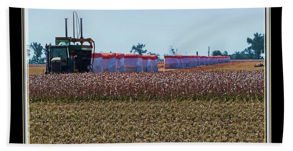 Nature Bath Sheet featuring the photograph Cotton Harvest by Debbie Portwood