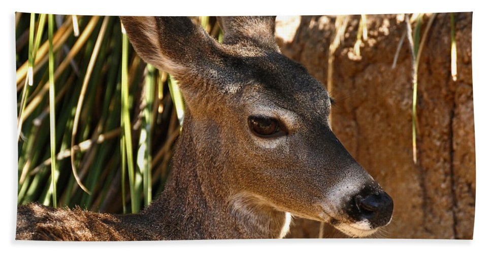 Coues Hand Towel featuring the photograph Coues White-tailed Deer - Sonora Desert Museum - Arizona by Mark Valentine