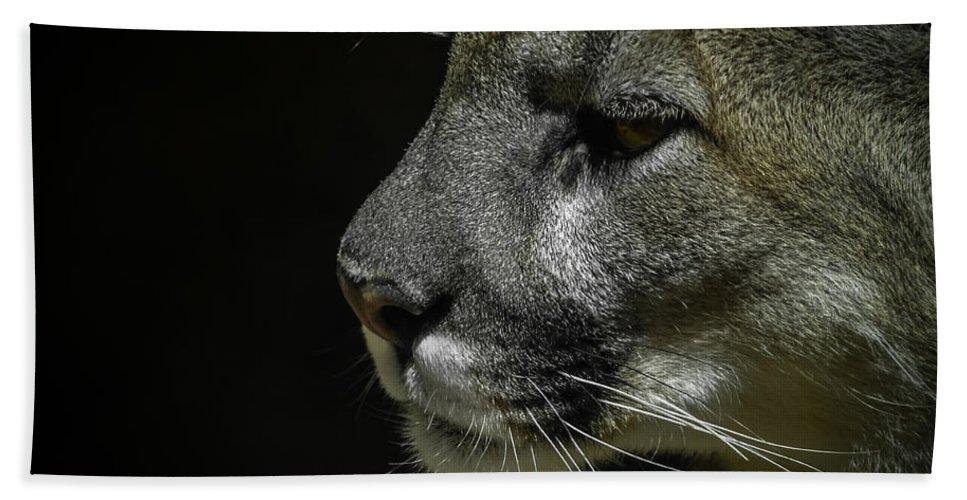 Mountain Lion Bath Sheet featuring the photograph Cougar by Ernie Echols