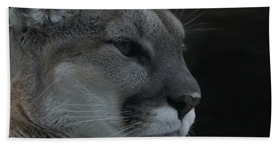 Mountain Lion Hand Towel featuring the photograph Cougar Profile by Ernie Echols