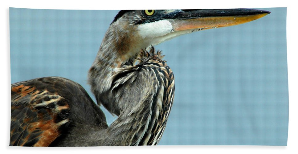 Great Blue Heron Bath Sheet featuring the photograph Counterclockwise Spiral by Norman Johnson