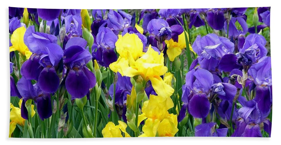 Country Road Irises Hand Towel featuring the photograph Country Road Irises by Will Borden