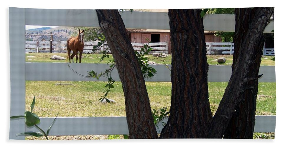 Horse Bath Sheet featuring the photograph Country Setting by Bobbee Rickard