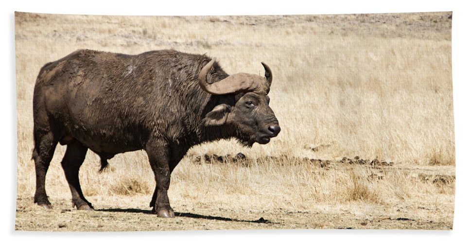 African Buffalo Bath Sheet featuring the photograph Covered In Mud by Douglas Barnard