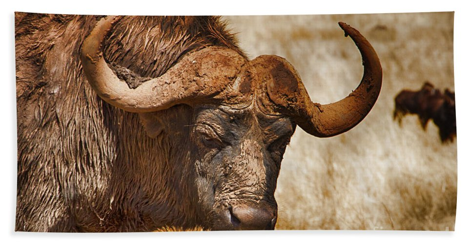 African Buffalo Hand Towel featuring the photograph Covered In Mud V3 by Douglas Barnard