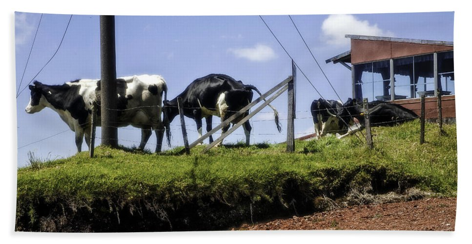 Cows Bath Sheet featuring the photograph Cows - Costa Rica by Madeline Ellis