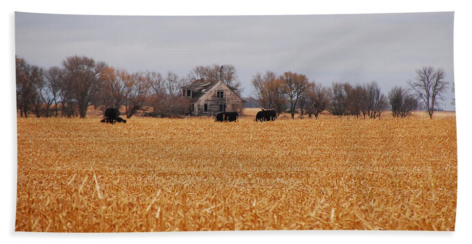 Landscape Hand Towel featuring the photograph Cows In The Corn by Mary Carol Story
