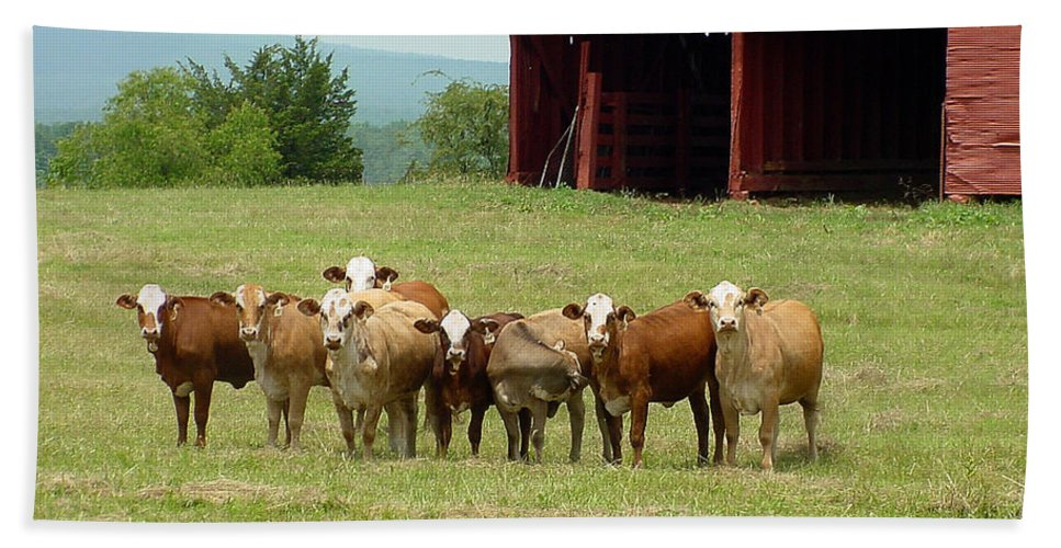 Cow Hand Towel featuring the photograph Cows8918 by Gary Gingrich Galleries