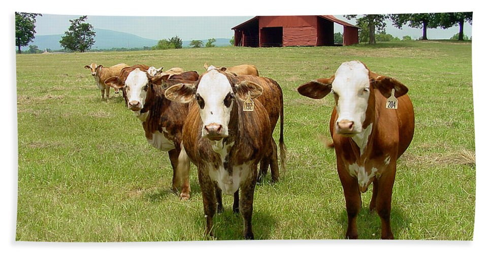 Cow Hand Towel featuring the photograph Cows8931 by Gary Gingrich Galleries