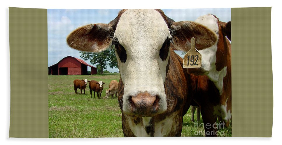 Cow Hand Towel featuring the photograph Cows8957 by Gary Gingrich Galleries