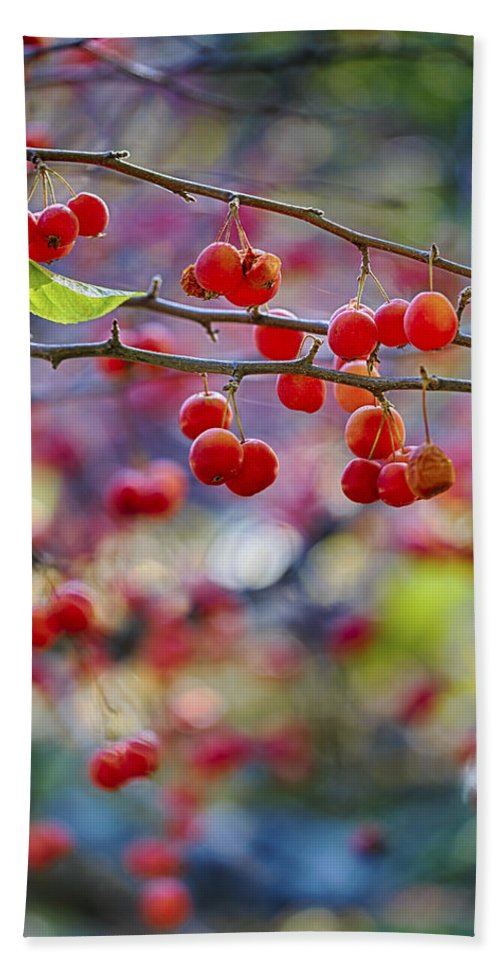 Crab Apple Hand Towel featuring the photograph Crab Apples 2 by Scott Campbell