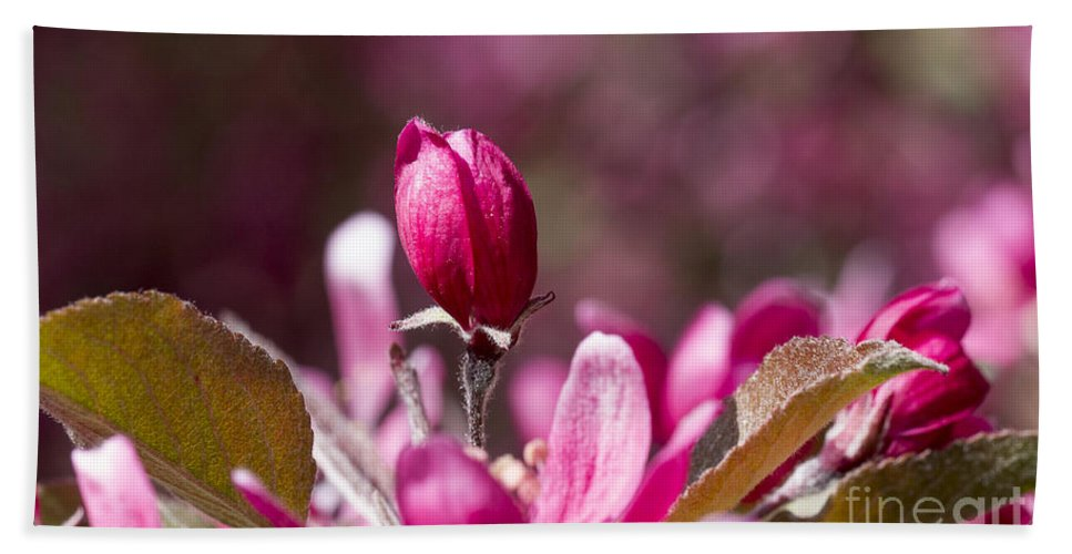 Arboretum Bath Sheet featuring the photograph Crabapple Bud by Steven Ralser