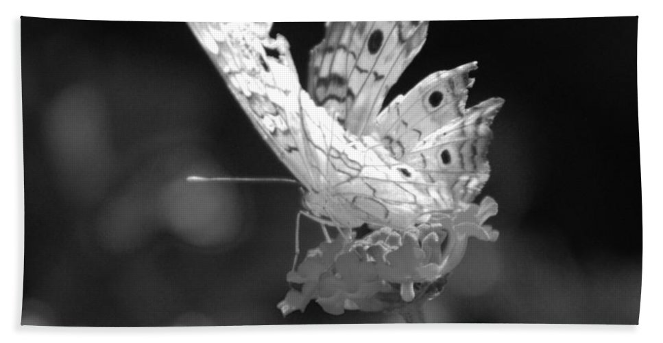 Lepidopterology Bath Sheet featuring the photograph Cracked Wing by Rob Hans