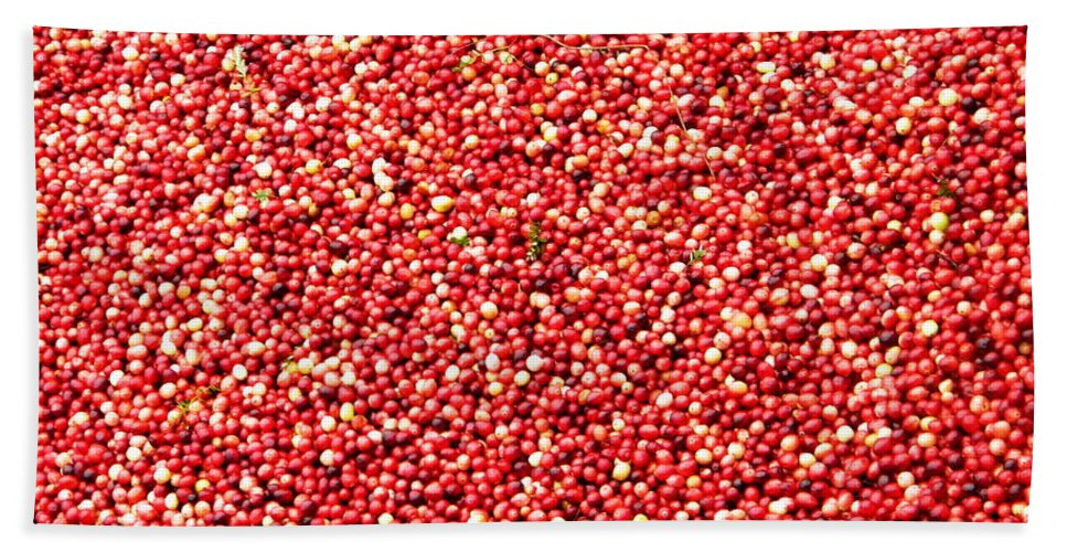 Cranberry Bath Sheet featuring the photograph Cranberry Harvest 3 by Andrea Anderegg