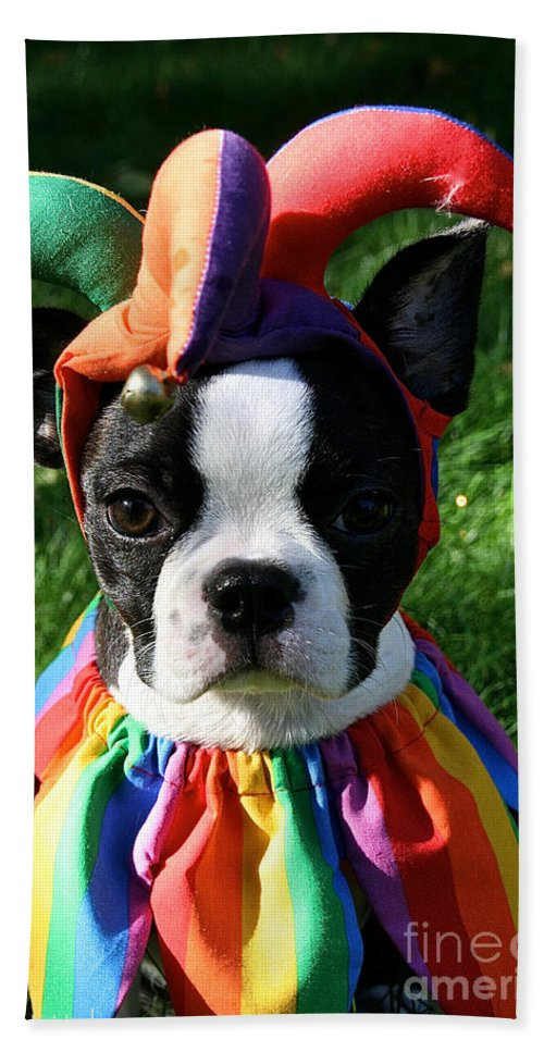 Dog Bath Sheet featuring the photograph Cranky Jester by Susan Herber