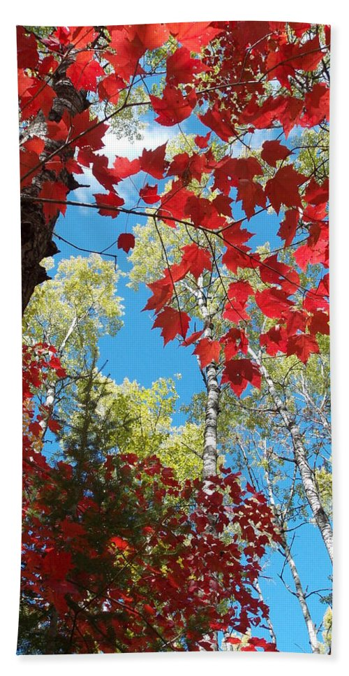 Peterson Nature Christina Bracha Foliage Voyager Voyagers Voyager's National Park Park Hand Towel featuring the photograph Crimson Foliage by James Peterson