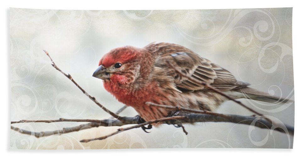 Animals Bath Sheet featuring the photograph Croching Finch by Debbie Portwood